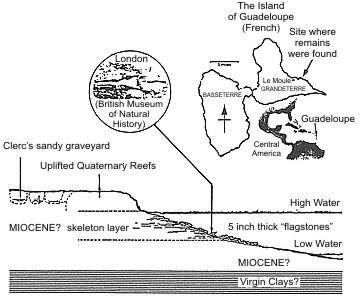 location_miocene