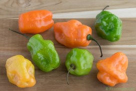 Aji-Dulces_Sweet-Peppers