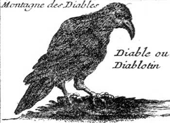 diablotin1