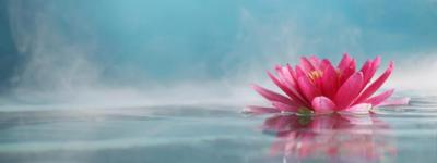 850_400_flor-de-lotus-significado-e-simbolismo-da-flor-sagrada_1495722386