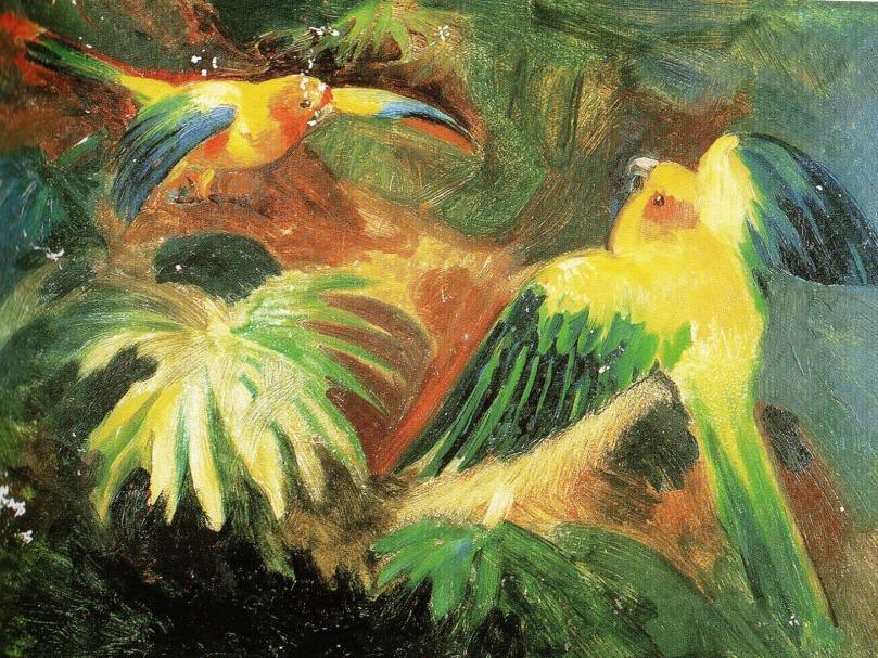 Estudo de pássaros na selva. Johann Moritz Rugendas (1802-1858)