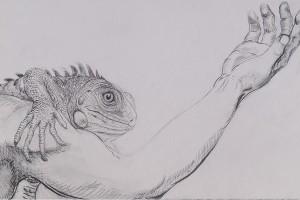 La-iguana-web-1-300x200