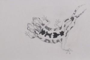 La-Salamandraweb-1-300x200