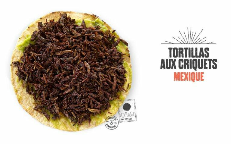 tortillas-criquets-mexique-768x478-2108499012.jpg