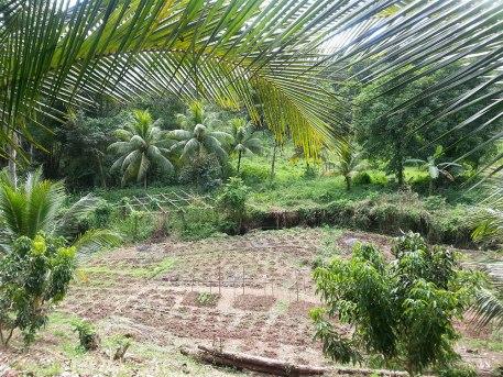 Zimbali-Retreat-Farm-Tour-Farm